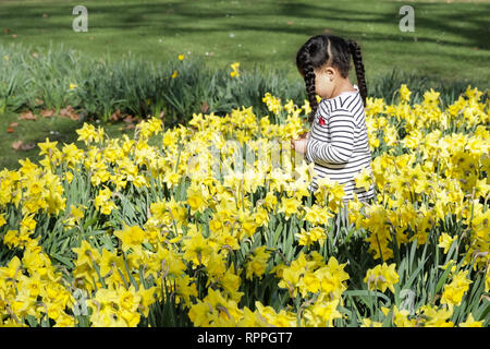 St James's Park, London. 22nd Feb 2019. UK Weather: Springtime in London. A young girl surrounded by daffodils in St James's Park, London, UK. Credit: amanda rose/Alamy Live News - Stock Image