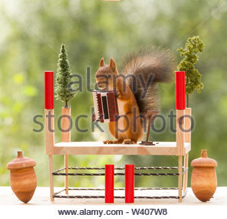 red squirrel hold an accordion - Stock Image