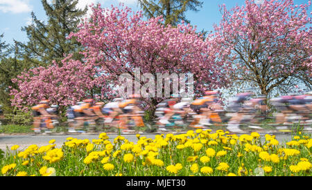 Ainderby Steeple, North Yorkshire, UK. 5th May 2018. The Tour de Yorkshire peloton passes through the North Yorkshire countryside on the third day of racing. Tomorrows race is the final leg over 190Km between Halifax and Leeds. Credit Robert Smith/ Alamy - Stock Image