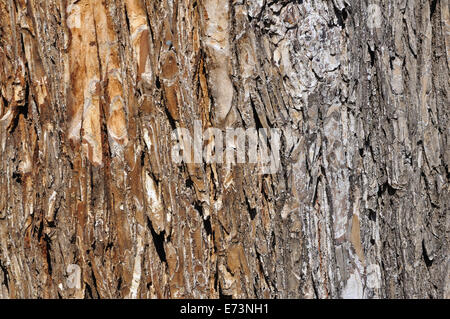 Tree trunk closeup - Stock Image