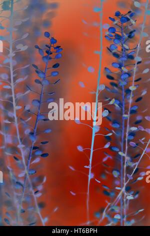 thlapsi fine art photography  Jane Ann Butler Photography JABP1865 - Stock Image