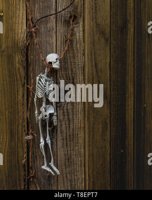 A skeleton suggesting a person has been hanged by a barb wire against a wooden fence- spooky halloween decoration with plenty of copy space - Stock Image
