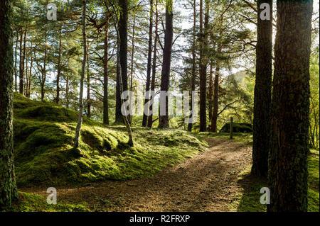 Balmacaan woodlands near Drumnacrochit, Scotland - Stock Image