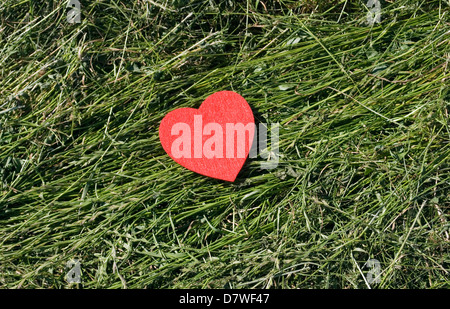 red heart on the grass - Stock Image