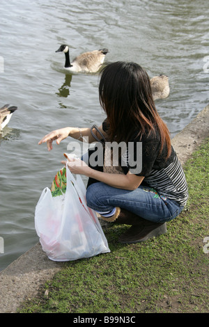 Young Woman Feeding Goose and Ducks with Bread in a Park - Stock Image