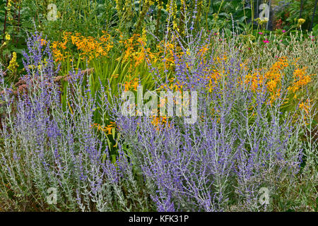 Garden flower border with Perovskia, Crocosmia making a colourful display - Stock Image