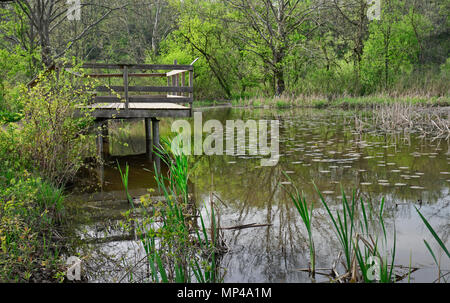 Wildlife viewing lookout deck in marshes in Royal Botanical Gardens, Burlington, Ontario, Canada - Stock Image