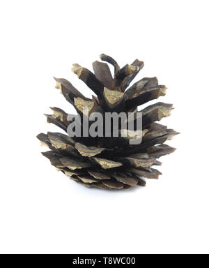 Dry disclosed pine cone closeup on white - Stock Image