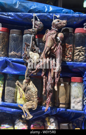 Llama fetuses and other 'cures' at the La Hechiceria Witches Market in La Paz, Bolivia - Stock Image