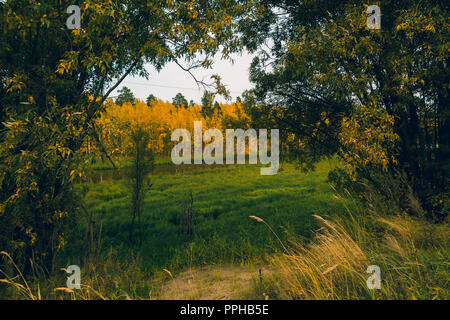 General plan of the forest with yellow leaves and a green meadow - Stock Image