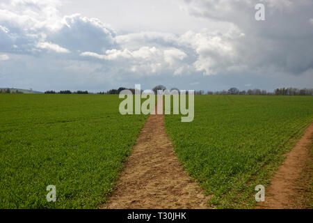 Footpath in fields looking towards the Warwickshire village of Long Compton from Whichford Woods - Stock Image