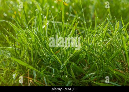 Wet Grass - Stock Image
