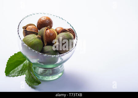 Fresh harvest of macadamia nuts, green macadamia nuts in shell and cracked nuts close up isolated on white background - Stock Image