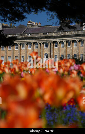 Royal Crescent, Bath, England, with spring flowers in foreground - Stock Image