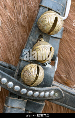 Brass harness or sleigh bells, a worn black leather harness strap with silver rivets on a draft horse. - Stock Image
