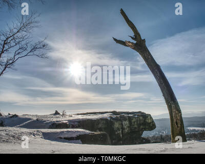 Bent and broken tree in the snow in winter. Trees on snow. winter landscape under snow - Stock Image