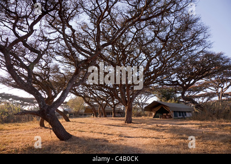 Tanzania, Ngorongoro. Tented suites nestle under the shade of the ancient acacia forest at Lemala Ngorongoro. - Stock Image