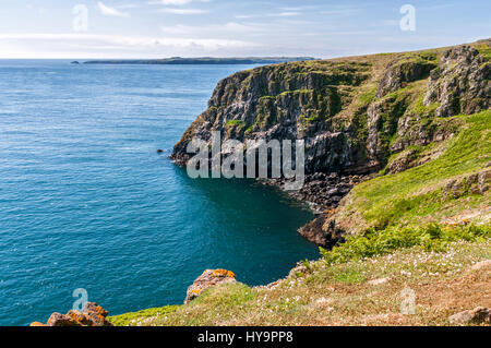 Seabird colony on Lundy off the coast of the UK - Stock Image