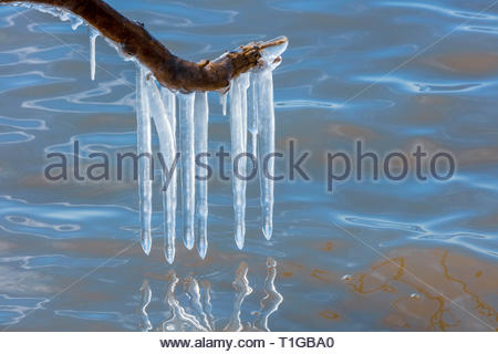 icicles hanging over lake from tree branch in spring at Lynde Shores Conservation Area in Whitby Ontario Canada - Stock Image