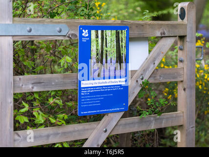 National Trust information sign on wooden gate on the entrance to Dockey Woods, Ashridge - Stock Image