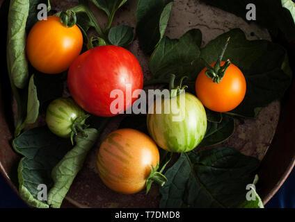 Fresh summer tomatoes in metal bowl - Stock Image