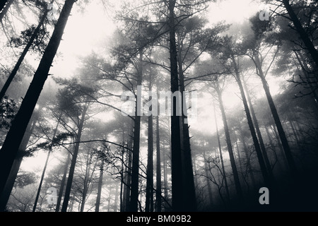 In the fog and the rain in the Yellow Mountains of Huangshan, China - Stock Image