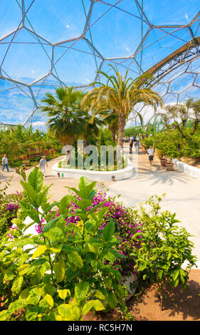 Eden Project, Cornwall. Inside The Mediterranean (Warm Temperate) Biome. - Stock Image