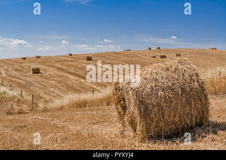 Farmland on countryside during harvest with hay or wheat straw bales. Southern European or Mediterranean landscape on summer. Alentejo, Portugal - Stock Image