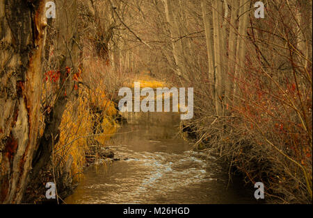 creek flowing through the woods - Stock Image