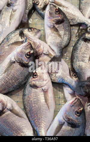 Daurade fish - Orate -  on display for sale on market stall at old street market - Mercado -  in Ortigia, Syracuse, Sicily - Stock Image