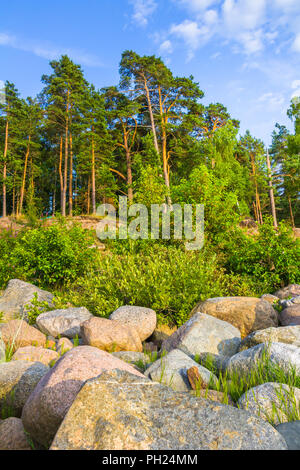 Beach with forest - Stock Image
