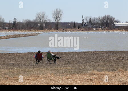 Quebec,Canada. An older couple watching snow geese at the Lac Saint-Pierre RAMSAR site in Saint-Barthelemy - Stock Image