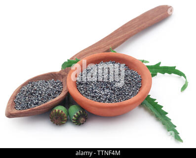 Poppy flower seeds and pods over white background - Stock Image