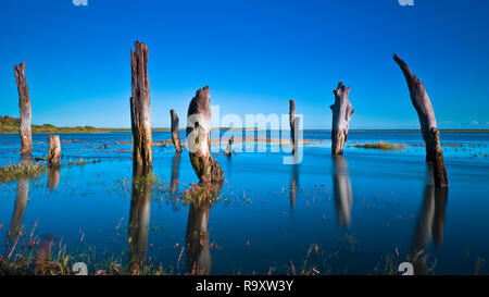 Thornham stumps on the North Norfolk coast during a high tide. - Stock Image