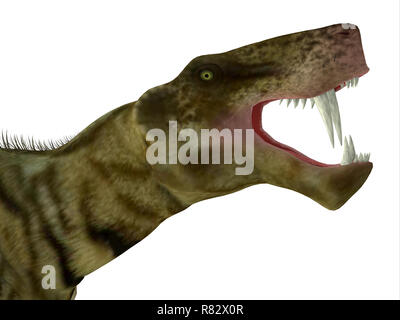 Inostrancevia Dinosaur Head - Inostrancevia was a carnivorous cat-like dinosaur that lived in Russia during the Permian Period. - Stock Image
