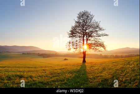 Tree and sun - Stock Image