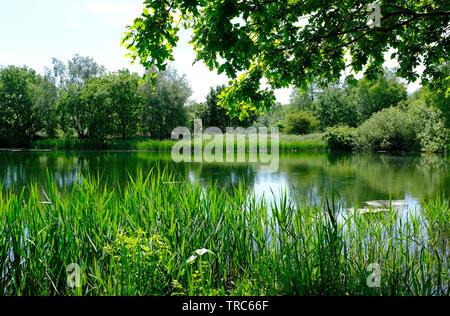pensthorpe nature reserve, norfolk, england - Stock Image