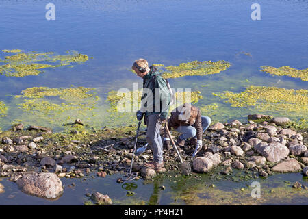 Two probably archaelogical find seekers or relic hunters with metal detectors in mud and low water at the banks of Sortedam Lake in Copenhagen. - Stock Image