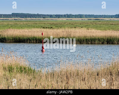 Bodden landscape near Zingst, red buoy and swane, reed along the waterfront,Zingst, Baltic Sea, peninsula of Fischland - Stock Image