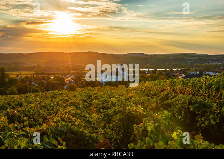Vineyard with Castle hotel, casino and three star restaurant Victor's Residenz, Nennig, Mosel valley, Saarland, Germany - Stock Image