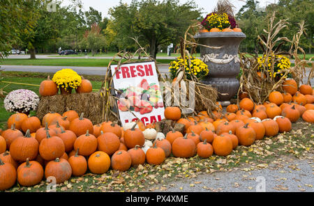 Autumn display of pumpkins at a farm stand in the Niagara Peninsula, Ontario, Canada. - Stock Image