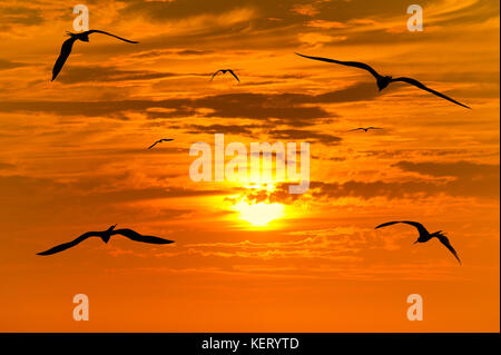 Bird silhouette flying is a silhouette of a bird with wings spread in a peaceful flight of freedom. - Stock Image