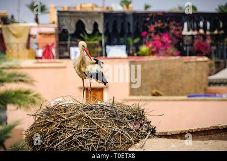 Stork nest in Badi palace in the Medina of Marrakech, Morocco - Stock Image
