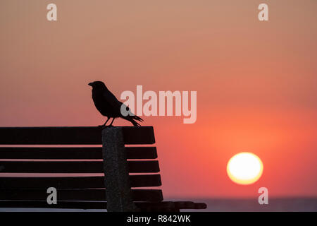 sun rising over sea with silhouette of crow sitting on bench. - Stock Image