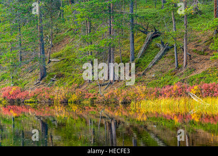 Autumn colored landscape - Stock Image