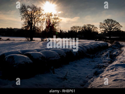 Snow covered fields in early morning sunlight - Stock Image