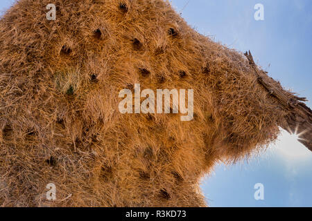 Africa, Namibia. Sociable weaver's nest with bird entrance holes. Credit as: Wendy Kaveney / Jaynes Gallery / DanitaDelimont.com - Stock Image