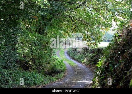 Rural Devon countryside in autumn England UK  KATHY DEWITT - Stock Image