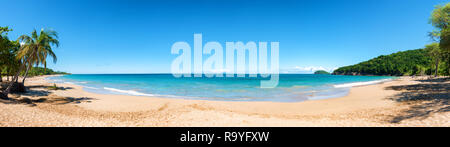 Coconut trees, golden sand, turquoise water and blue sky, wonderful pearl beach , Guadeloupe, French West Indies, panoramic view - Stock Image