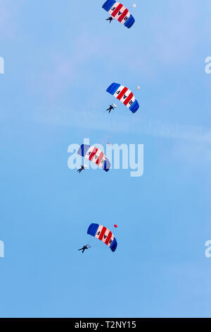 RAF Falcons parachute display team created in 1961 as part of the No 1 Parachute Training School - Stock Image